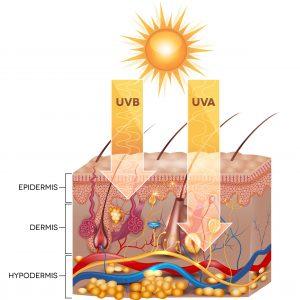 Penetrazione dei raggi UV nella Pelle - Coralya